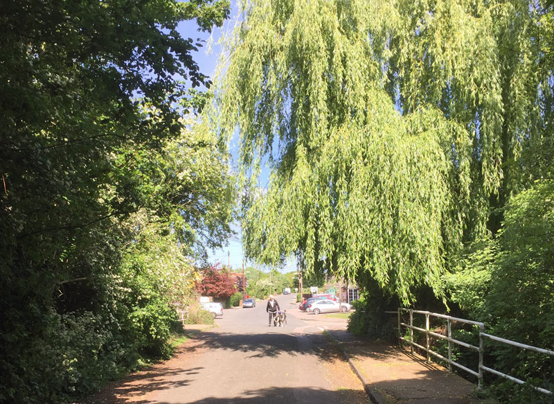willow trees in Old Wickford Road